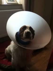 Ted dog cone head