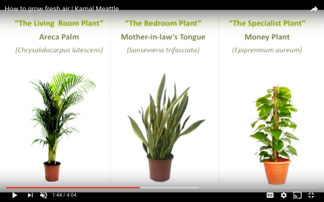 plants for air purification