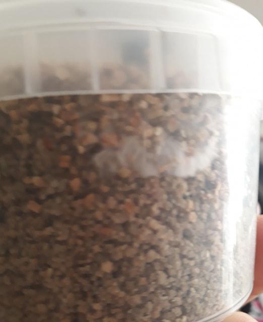 mushroom grow pot uk