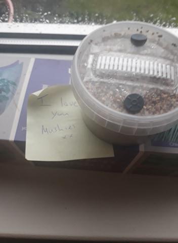 mushroom growpot